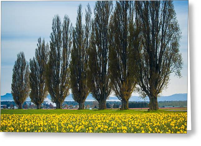 Skagit Trees Greeting Card by Inge Johnsson