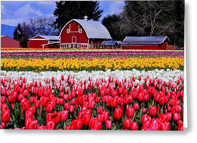 Red Barn Greeting Cards - Skagit Valley Greeting Card by Benjamin Yeager