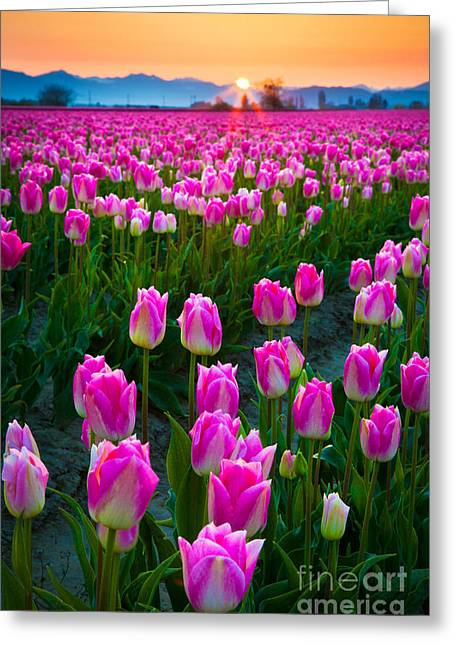 Vibrant Green Greeting Cards - Skagit Valley Dawn Greeting Card by Inge Johnsson