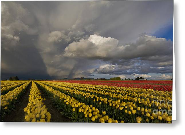 Skagit Valley Storm Greeting Card by Mike Reid
