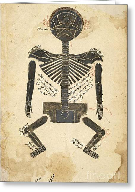 Label Greeting Cards - Skeleton Anatomy, Persia, 17th Century Greeting Card by British Library