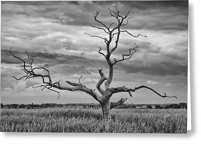 Snape Greeting Cards - Skeleton tree at Snape  Greeting Card by Dale Reynolds