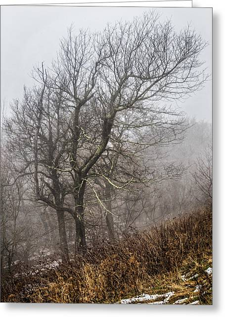 Reflections In River Greeting Cards - Skeletons in the Fog Greeting Card by Debra and Dave Vanderlaan