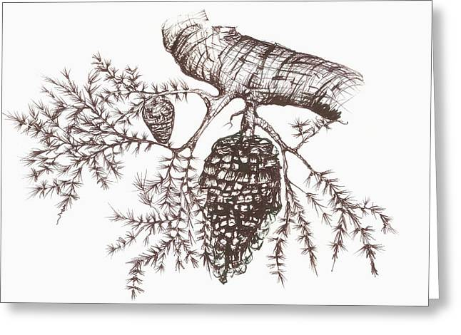 Sketch Of A Pine Cone Hanging Greeting Card by Vern Hoffman