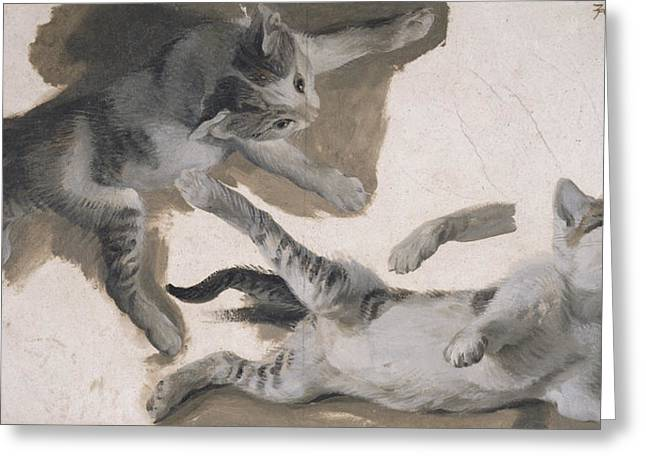 Cat Drawings Greeting Cards - Sketches Of A Kitten Greeting Card by Alexandre-Francois Desportes