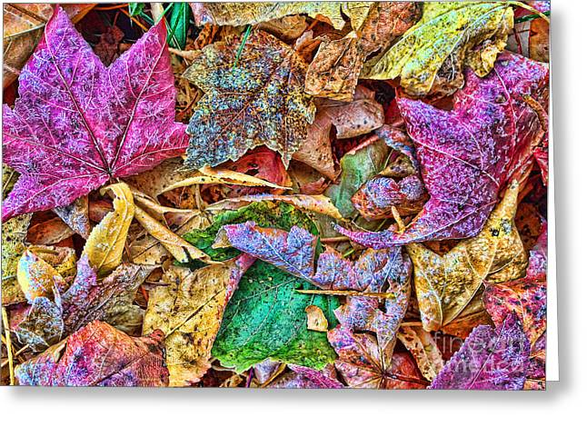 Landscape Posters Greeting Cards - Sketches of Leaves Greeting Card by Todd Breitling