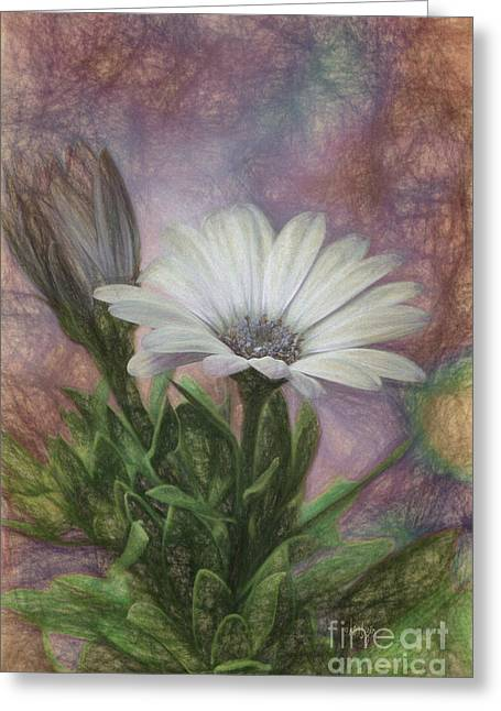 Daisy Bud Greeting Cards - Sketchy Daisy In Mother Of Pearl Greeting Card by Lois Bryan