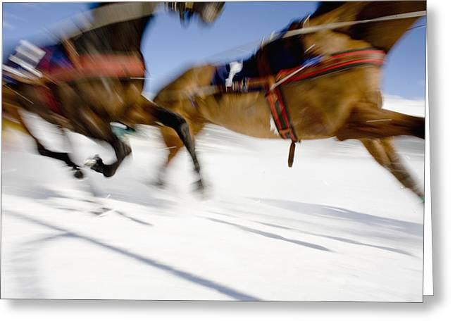 Swiss Culture Greeting Cards - Ski Joring Race Greeting Card by Vicki Couchman