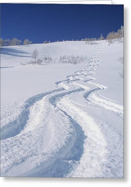 Ski Tracks In Silver Fork, Big Greeting Card by Howie Garber