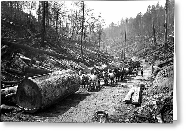 Loggers Greeting Cards - SKIDDING REDWOOD LOGS c. 1890 Greeting Card by Daniel Hagerman