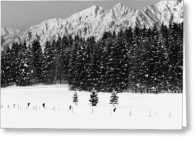 Snow Scene Landscape Greeting Cards - Skiing in the white Greeting Card by Yuri Santin