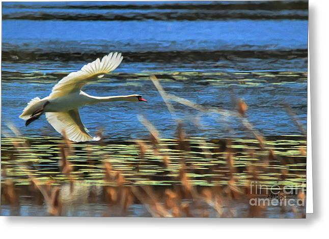 Flying Swan Greeting Cards - Skimming Greeting Card by Lois Bryan