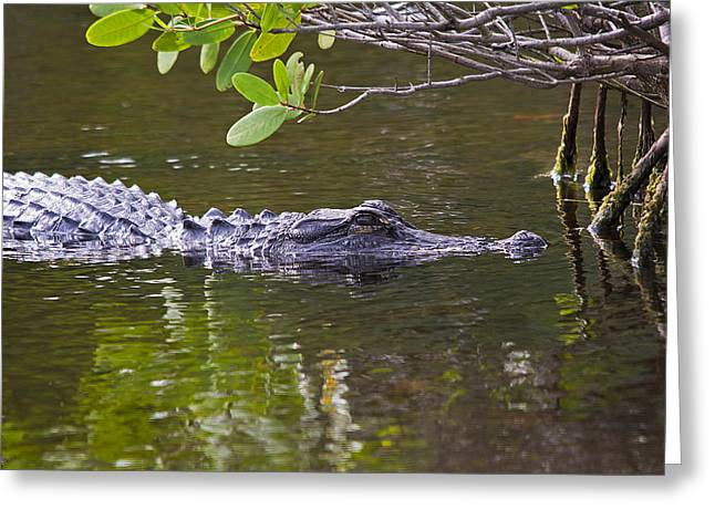 Florida Swamp Reflection Greeting Cards - Skinnydip With Me Greeting Card by Kenneth Albin
