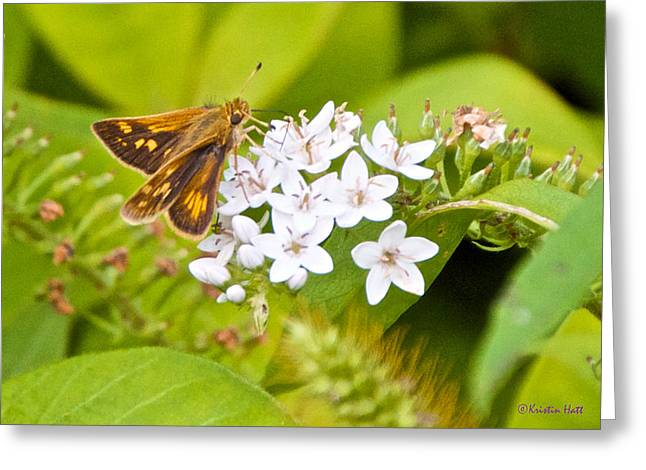 Gooseneck Loosestrife Greeting Cards - Skipper Greeting Card by Kristin Hatt