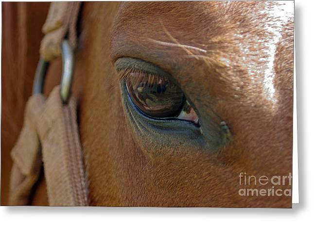 Caballo. Fence Greeting Cards - Skippers Eye Greeting Card by J M Lister