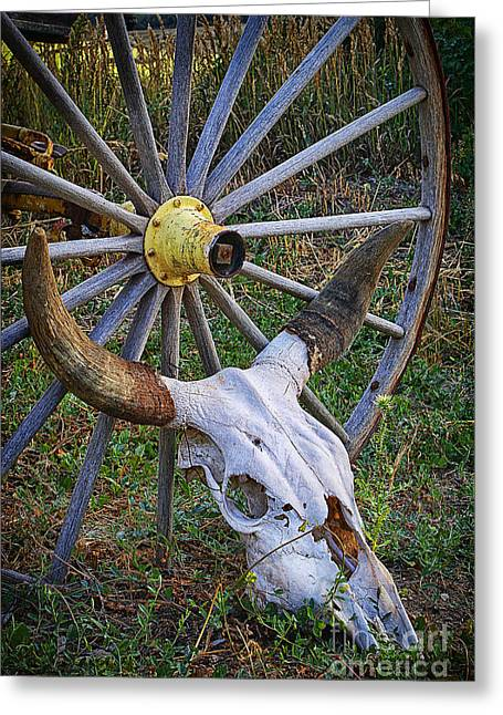 Mancos Greeting Cards - Skull Among the Living Greeting Card by Priscilla Burgers