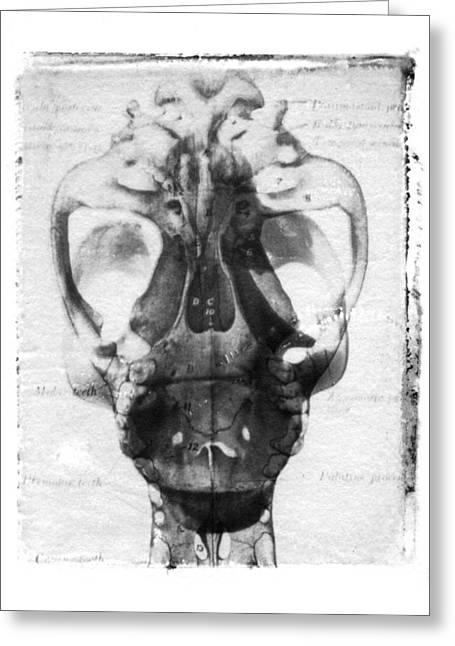 Alternative Skull Greeting Cards - Skull Greeting Card by Jane Linders