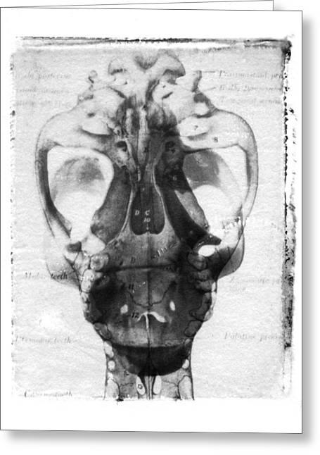 Skull Greeting Card by Jane Linders
