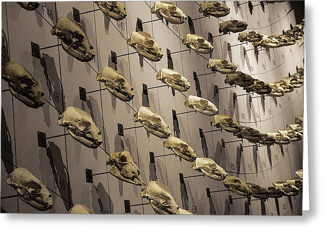 Skull Photographs Greeting Cards - Skull Wall Greeting Card by Garry Gay