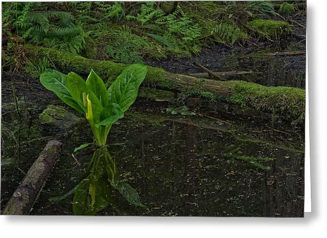 Skunk Weed Cabbage in the Pond Greeting Card by Paul W Sharpe Aka Wizard of Wonders