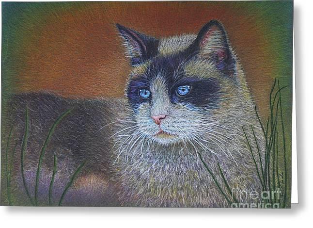 Cats Drawings Drawings Greeting Cards - Skweela Greeting Card by Sari Sauls
