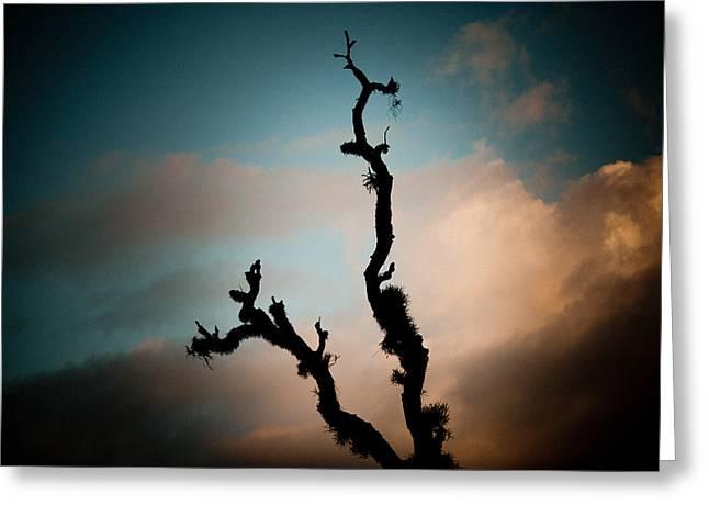 Tibetan Buddhism Greeting Cards - Sky and old tree Greeting Card by Raimond Klavins