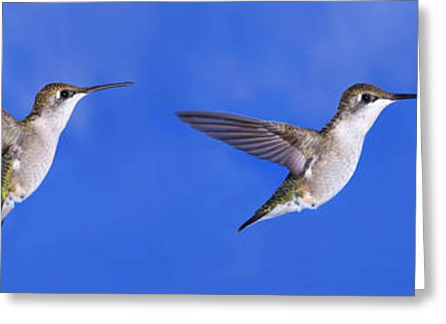 Recently Sold -  - Hovering Greeting Cards - Sky Blue Flyers Collage Greeting Card by Leda Robertson