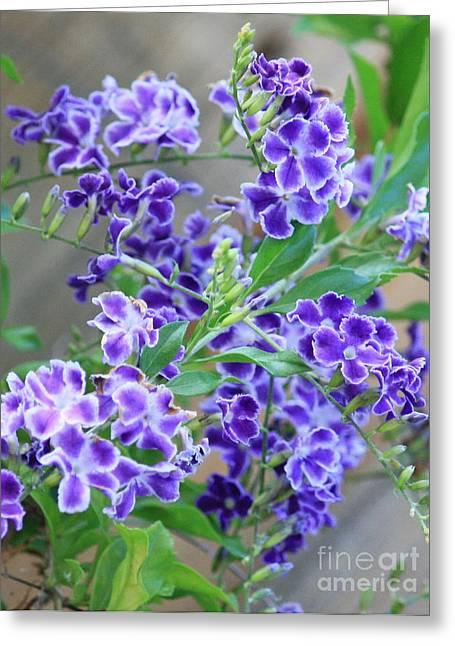 Carol Groenen Greeting Cards - Sky Flower Greeting Card by Carol Groenen