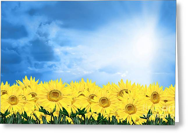 sky sunflower Greeting Card by Boon Mee