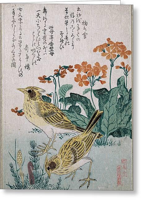 Primroses Drawings Greeting Cards - Skylarks and Primroses  Greeting Card by Kubo Shunman