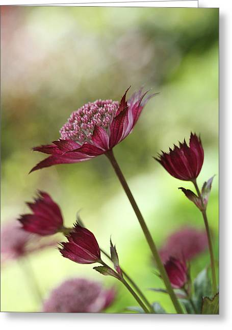 Small Floral Greeting Cards - Botanica ..  Skyline Greeting Card by Connie Handscomb