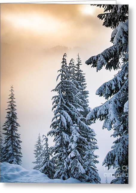 Pacific Northwest Greeting Cards - Skyline Lake Forest Greeting Card by Inge Johnsson