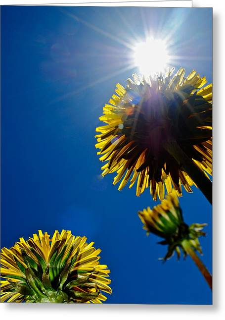 Shining Down Greeting Cards - Skyskrapers Greeting Card by Frozen in Time Fine Art Photography