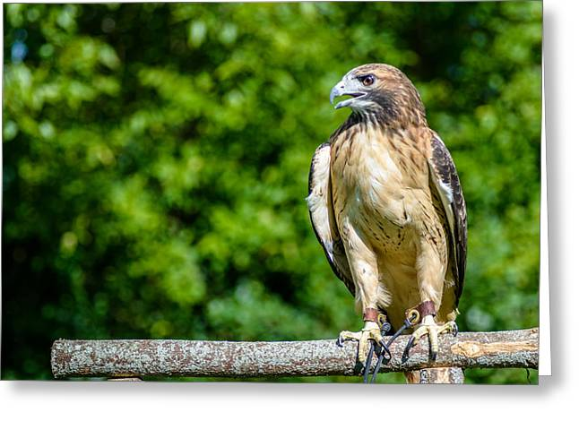 Nature Center Greeting Cards - Skywalker Greeting Card by Randy Scherkenbach