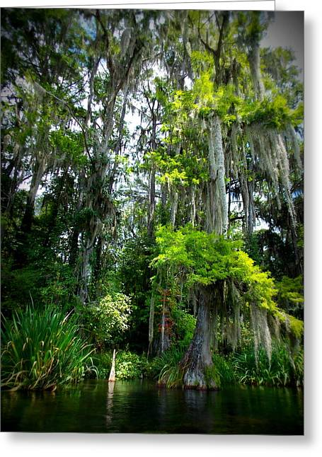 Tress Greeting Cards Greeting Cards - Skyward Cypress Greeting Card by Sheri McLeroy