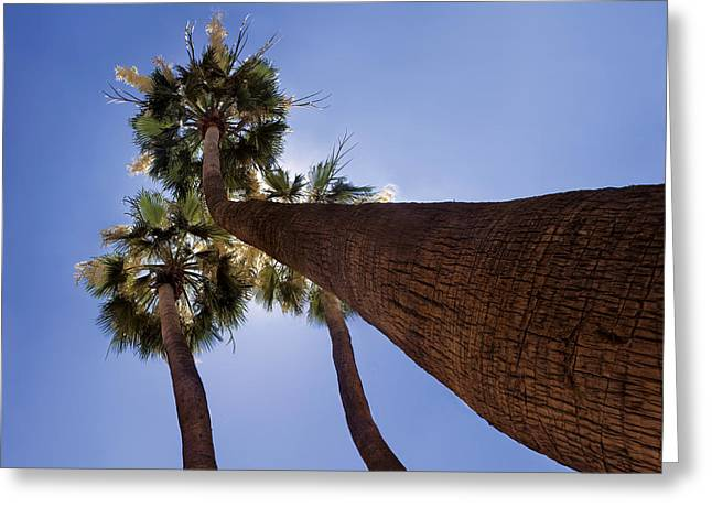 Triplets Greeting Cards - Skyward Palms Greeting Card by Dave Dilli