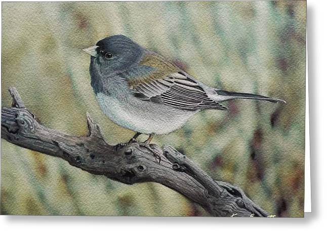 Slates Greeting Cards - Slate-Colored Junco Greeting Card by Ken Everett