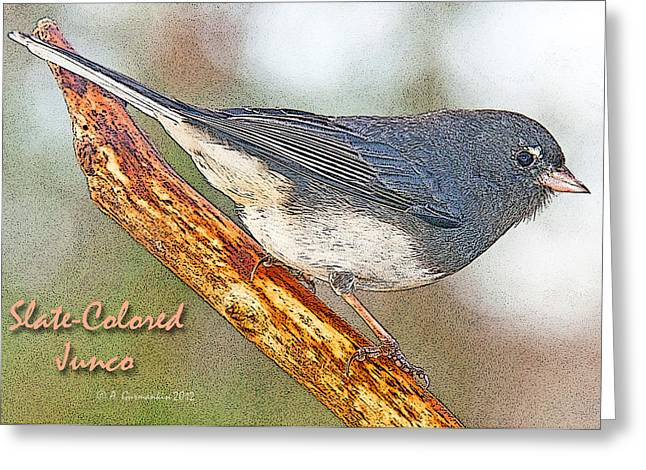 Greeting Card featuring the photograph Slate-colored Junco Poster Image by A Gurmankin