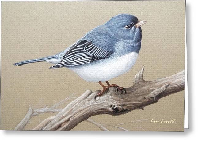 Slates Greeting Cards - Slate-Colored Junco Study Greeting Card by Ken Everett