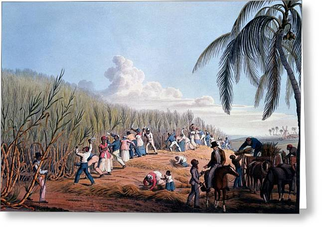 Slaves Greeting Cards - Slaves Cutting The Cane, From Ten Views Greeting Card by William Clark