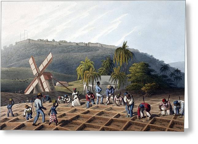 Slaves Planting Sugar Cane, 19th Century Greeting Card by British Library