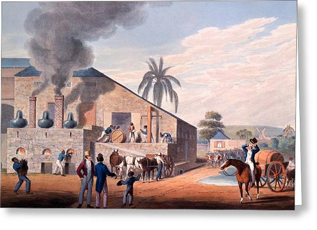 Slaves Greeting Cards - Slaves Set To Work Producing Rum Greeting Card by William Clark