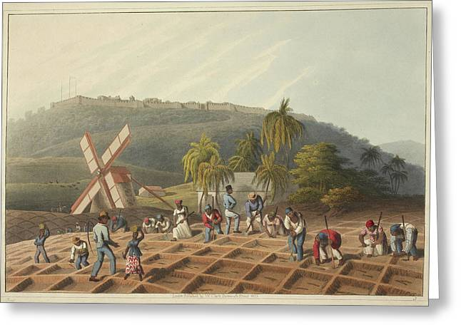 Slaves Working On A Plantation Greeting Card by British Library