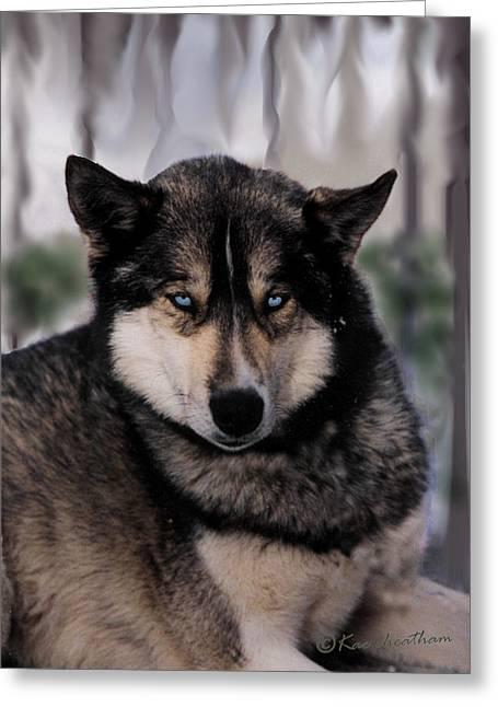 Sled Dog Resting Greeting Card by Kae Cheatham