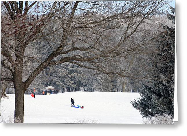Skiing Posters Digital Art Greeting Cards - Sledding At Petrifying Springs Park Greeting Card by Kay Novy