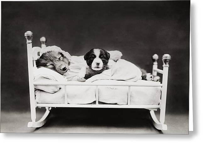Old Dogs Greeting Cards - Sleep Over Greeting Card by Aged Pixel