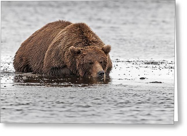 Fishing Creek Greeting Cards - Sleeping Bear  Greeting Card by Gary Langley