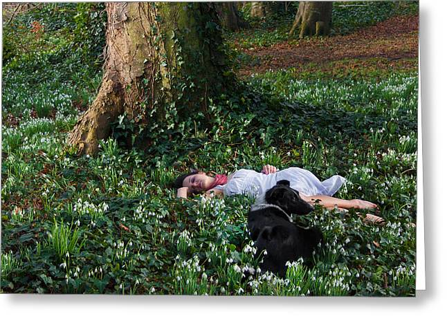 Guard Dog Greeting Cards - Sleeping Beauty and Friend Greeting Card by Semmick Photo