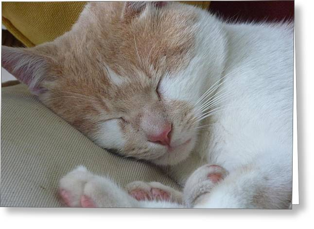 Pictures Of Cats Greeting Cards - Sleeping Beauty Greeting Card by Diane Palmer