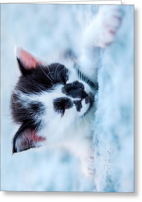 Cute Kitten Greeting Cards - Sleeping black and white kitten on blue plush bed Iphone Case Greeting Card by Iris Richardson